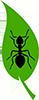 Safe Earth Pest Control Logo